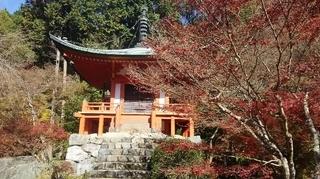 秋の醍醐寺1.JPG