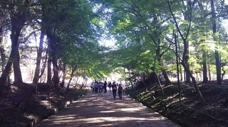 醍醐景色3.JPG